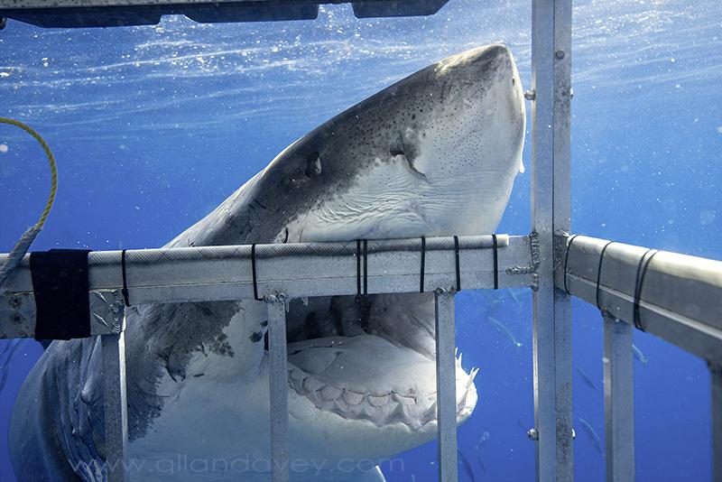biting cage-DSC5069-lres